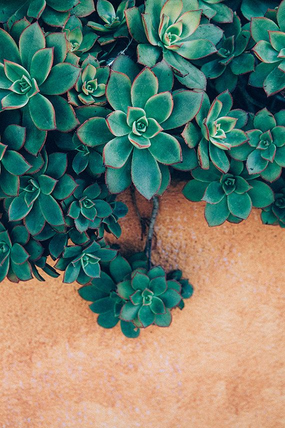 Instant Download 20 Cents Succulent Photography Bohemian