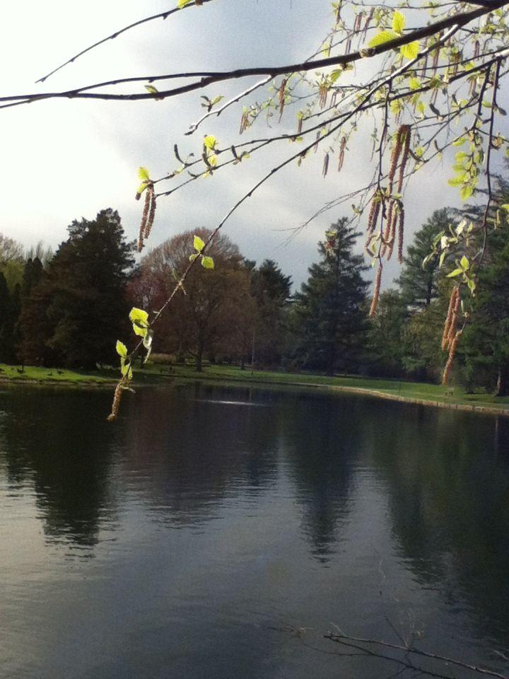 Pond in Crapo