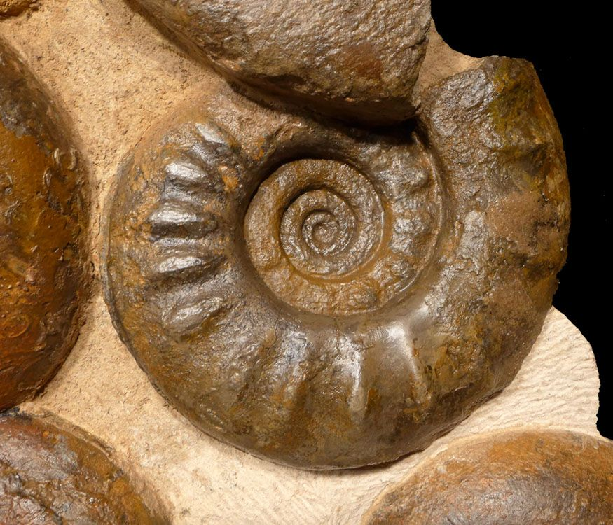 Ammonite, massive wall, Central High Atlas, Mountains. Morocco. Middle Jurassic Period (Lower Bajocian). 172-168 million years ago.
