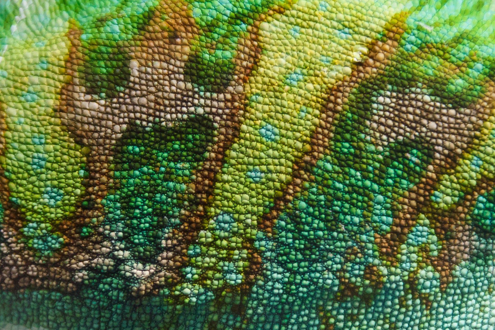 chameleon skin texture free stock photo  skin textures