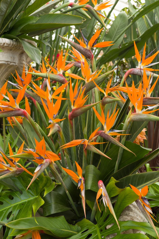 Oiseau Du Paradis En 2020 Fleurs Oiseaux De Paradis Oiseau Du Paradis Design De Jardin Tropical