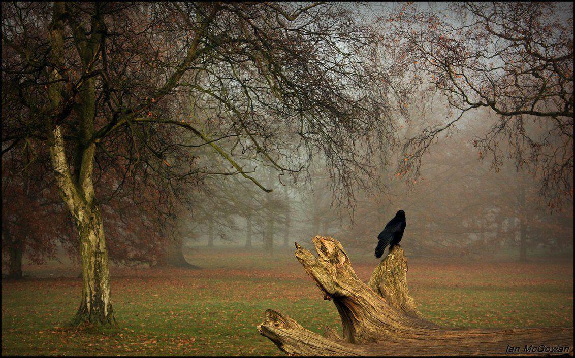 foggy again . by 999999999a