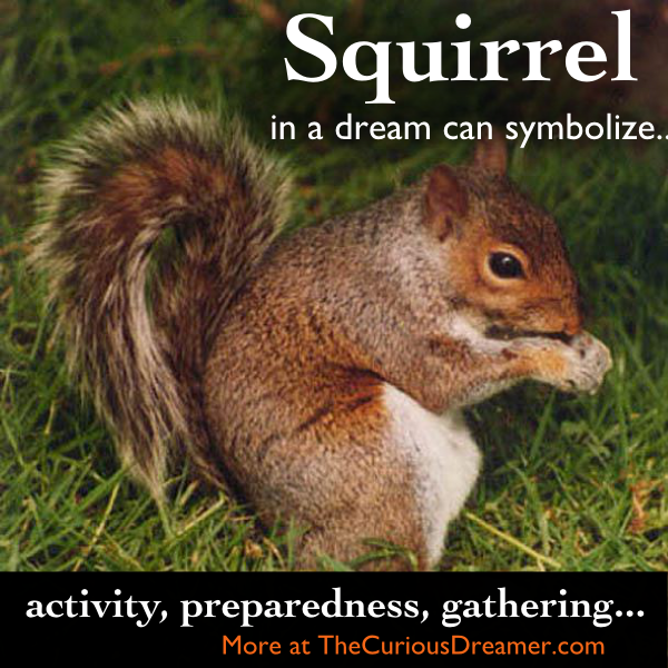 A Squirrel In A Dream Can Represent These Things Your Real Life