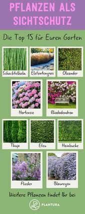 Pflanzen als Privatsphäre: Unsere Top 15 für Garten & Balkon   - UNSER GARTEN ♡ - #als #amp #Balkon #für #Garten #Pflanzen #Privatsphäre #Top #Unser #Unsere #schnellwachsendepflanzen