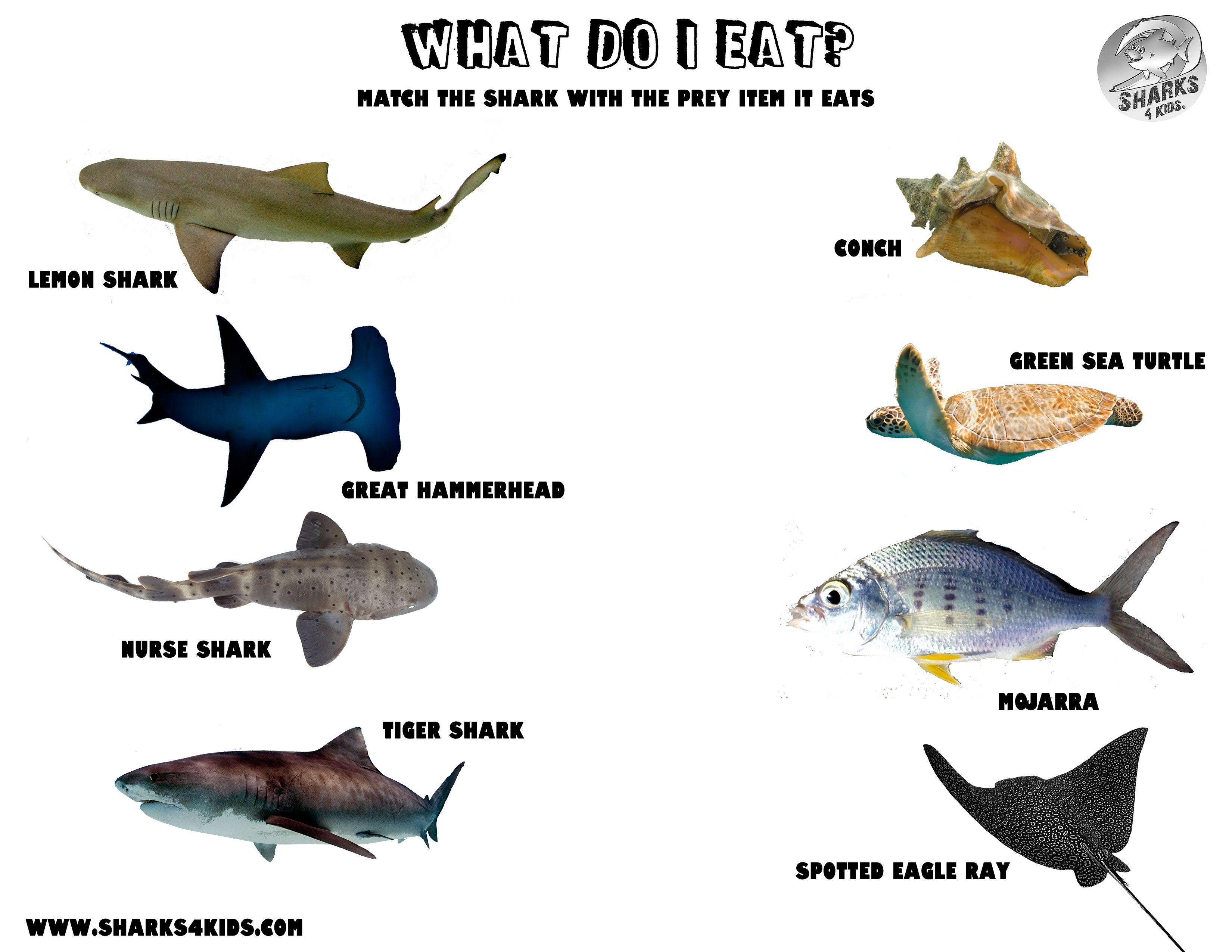 Activity What Do Sharks Eat Sharks For Kids Shark Activities [ 2550 x 3300 Pixel ]