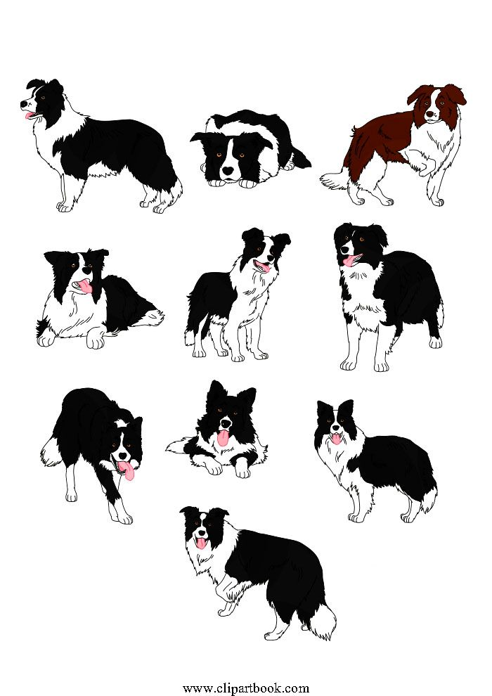 Pin By Eva Holscher On Border Collies One Of Life S Treasures X