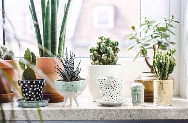 Les plantes pour d corer la salle de bains voil mes - Plantes pour salle de bain ...