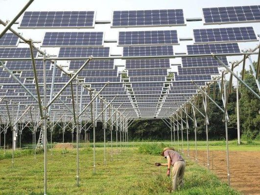 Produce Crops And Solar Energy Simultaneously Install Solar System On Crop Producing Farms Pv Panels Solar Energy Panels Solar Technology Solar Energy Diy