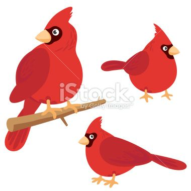 Bird Set Cardinal Birds Illustration Vector Art Illustration