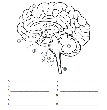 image result for blank brain diagrams to fill in school
