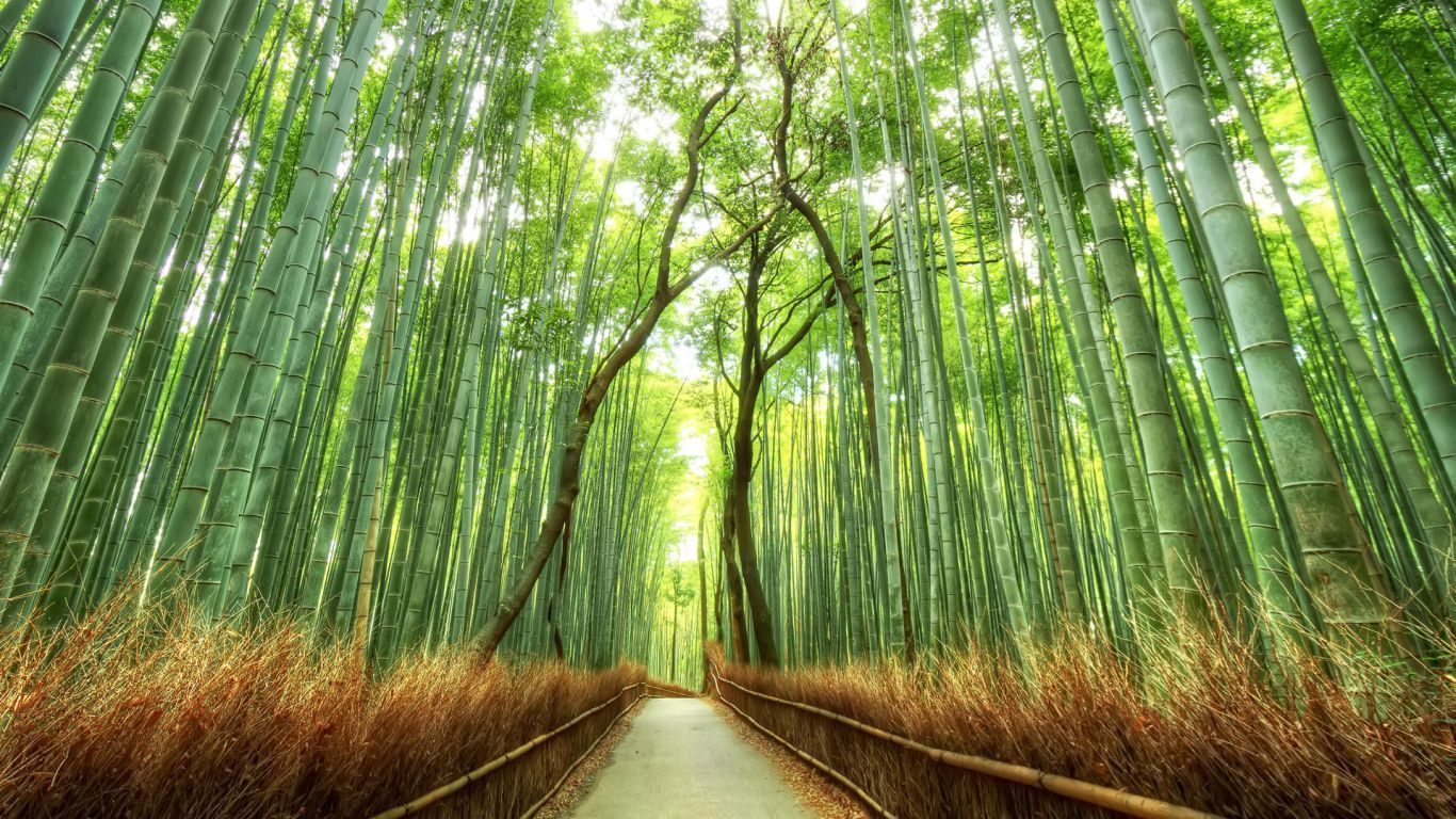 Desktop Fall Background Wallpaper Hd 1366x768 Backgrounds For Mobile Tablet And Pc Free Images Download Scenery Wallpaper Bamboo Forest Japan Forest Wallpaper