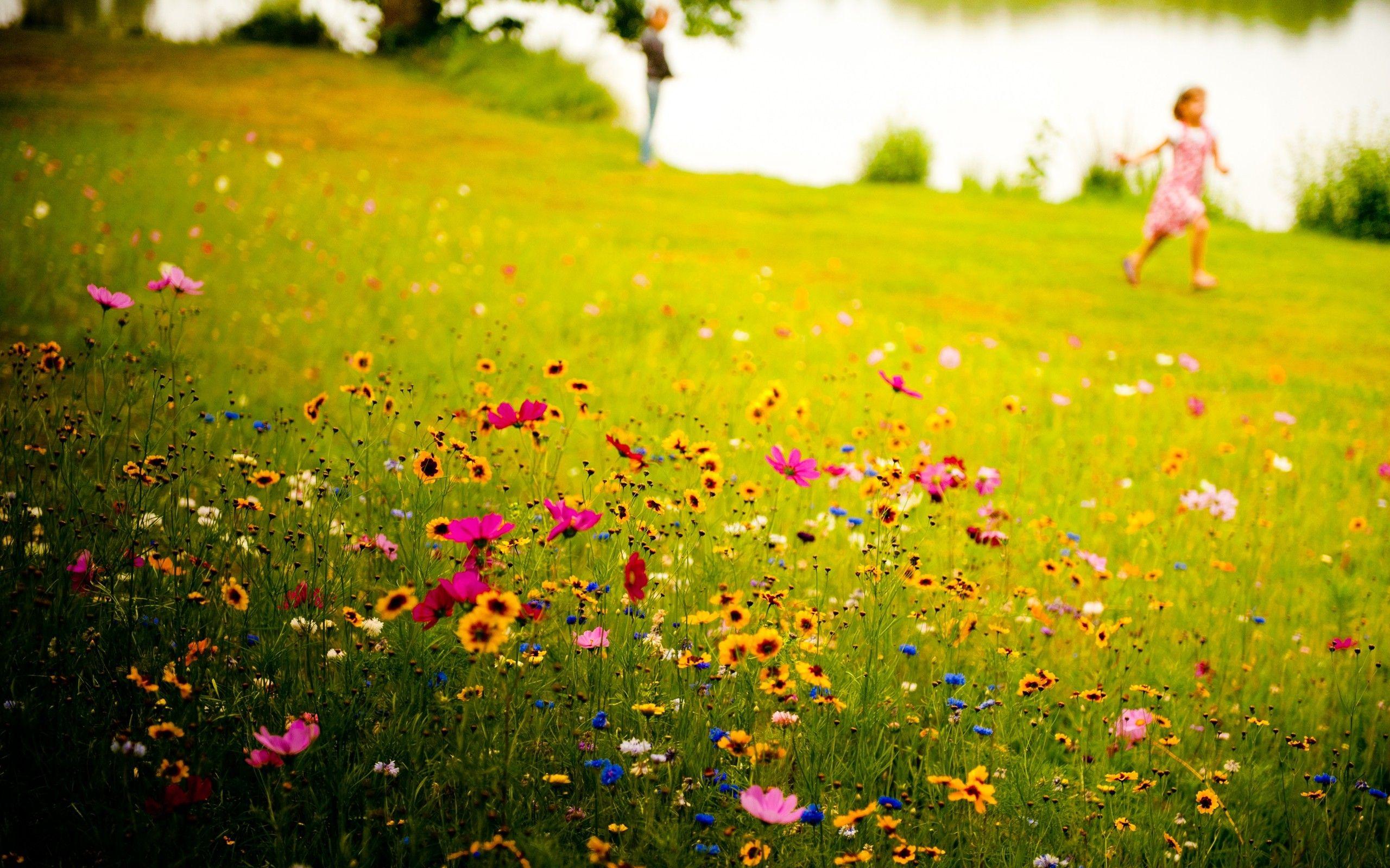 Landscapes Flowers Children Grass Meadows Wildflowers Nature Wild Flowers Flower Field