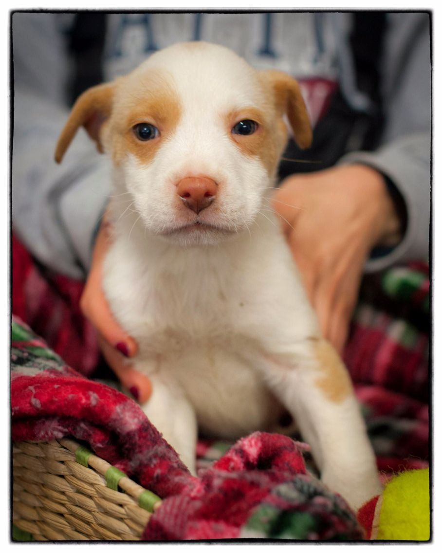 Highlights Of Some Of The Puppies And Dogs Available For Adoption