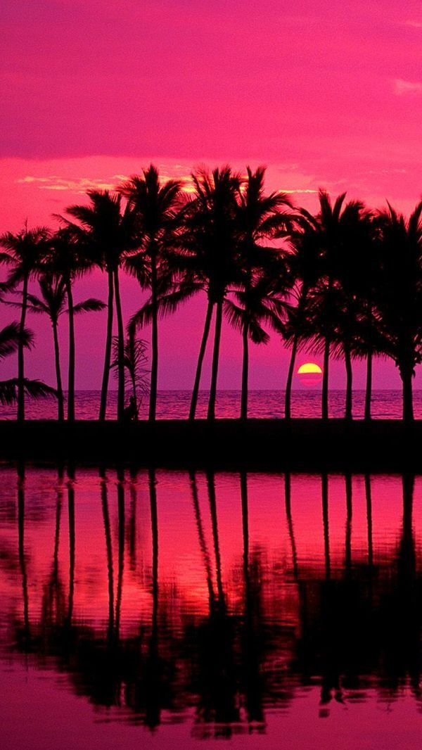Pink sunset with palm trees Sunset wallpaper, Nature