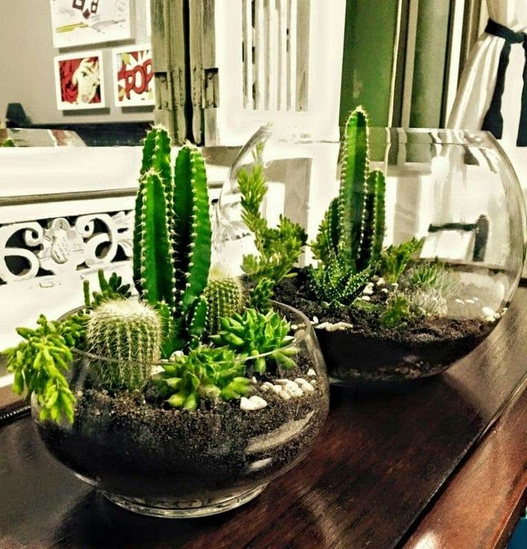 27 Beauty Cactus And Succulent Garden Ideas For Indoor Page 21 Of 28 Planting Succulents Indoors Succulent Garden Diy Succulent Garden Indoor
