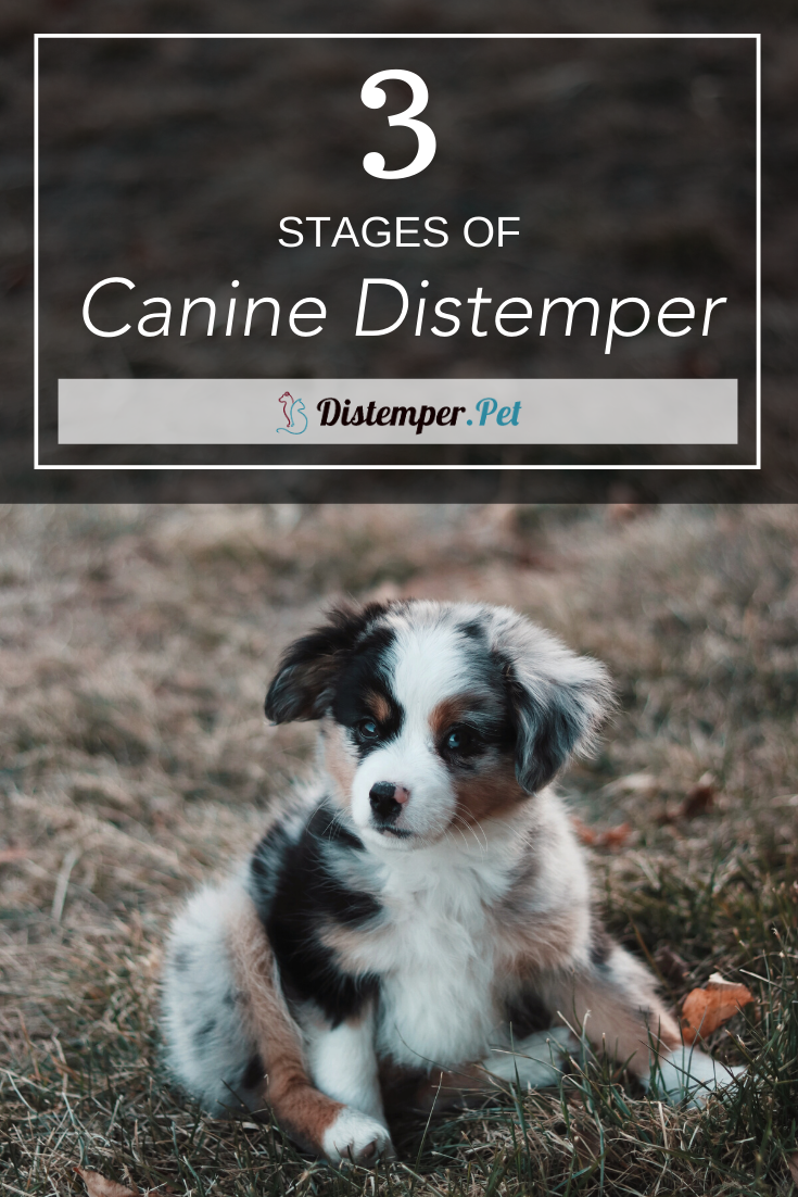 Pin On How To Protect Your Furry Friend From Distemper