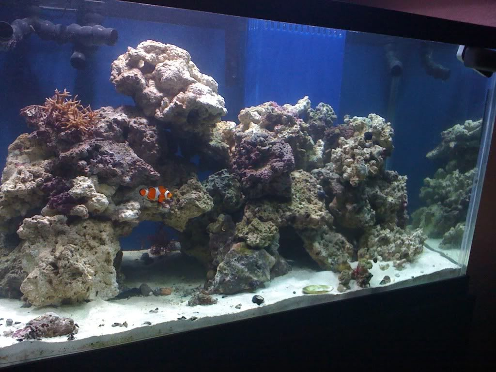 reef aquascaping designs | Live Rock Aquascaping - Page 2 ...
