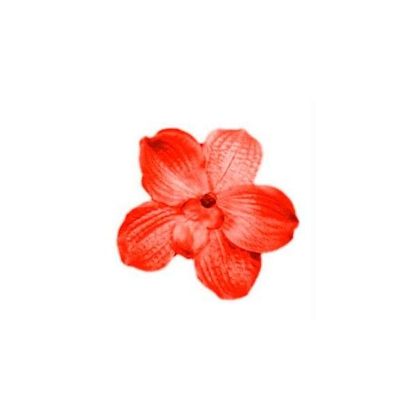 Tumblr liked on polyvore featuring flowers icon flowers fillers tumblr liked on polyvore featuring flowers icon flowers fillers flowers flower mightylinksfo Choice Image