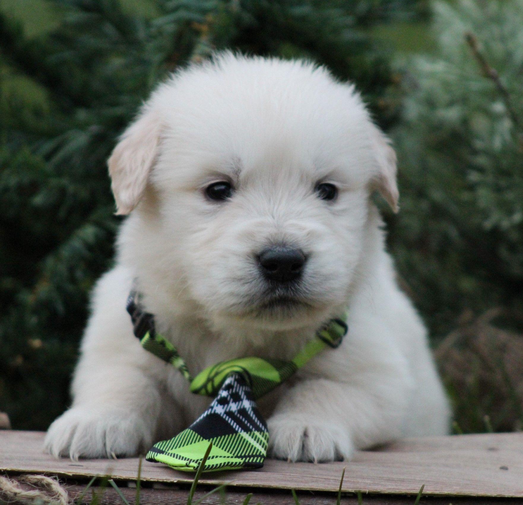 Park Art|My WordPress Blog_Golden Retriever Puppies For Sale In Ohio Under 200
