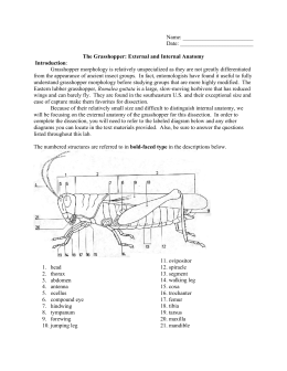 external grasshopper diagram 2016 toyota tundra trailer wiring name date the and internal anatomy biology
