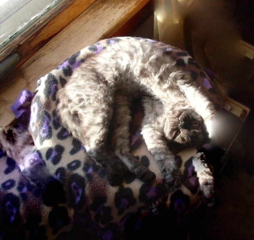 Bellatrix Courtesy Of Dena P From Appleton Wi Cat Sleeping Cute Awww Adorable Relax Cats Cute Cats Your Pet