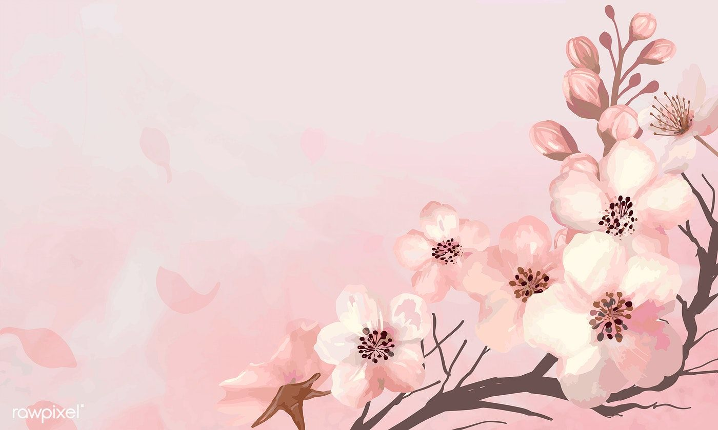 Hand Drawn Cherry Blossoms On A Pink Background Vector Free Image By Rawpixel Com Flower Illustration Cherry Blossom Background Pink Background