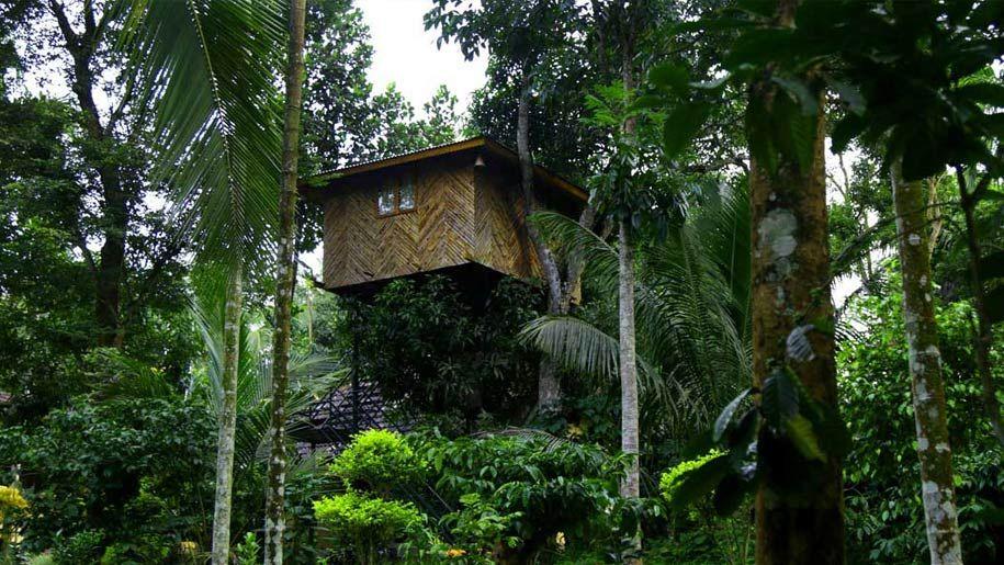 Top 15 Tree House Resorts in Kerala Tree house resort