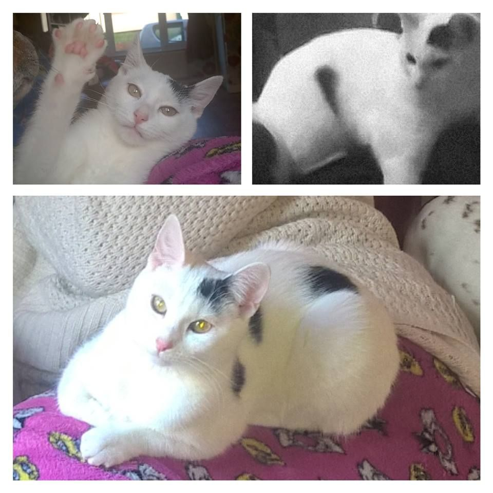 Hilda Is Missing In Stoke On Trent