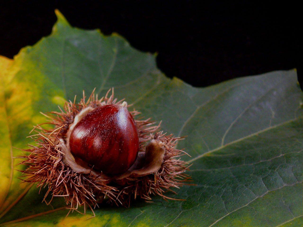 England Leaf Flora Nut Nuts Food Black England Leaf Flora Nut Nuts Food Black No Cook Meals Holidays In England Black Tree