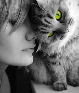 Green Eyed Cat Color Splash Cats Animals Cute Animals