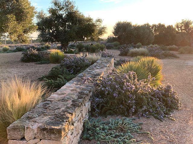 Luciano Giubbilei En Instagram The Garden This Morning Less Than A Year After Planting Lucianogiubbilei Landscape And Garden Design Formentera