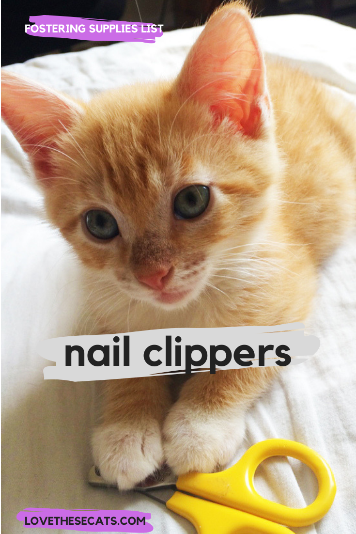 Kitten Nail Clippers Are One Essential Tool For Fostering Kittens Foster Kittens Kitten Kitten Supplies