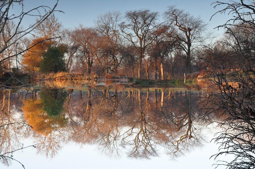 ¿Dónde está la realidad?  Qué manera está para arriba???  - Mañana escarchada en el Parque Washington - (Reflexión del agua es hacia arriba)