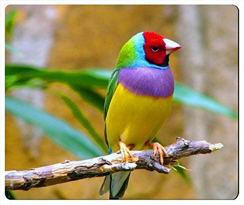 bc5feb813c899 Pin by chrischen on Beautiful Bird mouse pad | Bird wallpaper ...