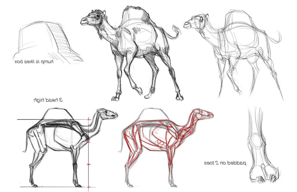 Animal Anatomy Drawing Drawing Animals Tutorials Art Reference How ...