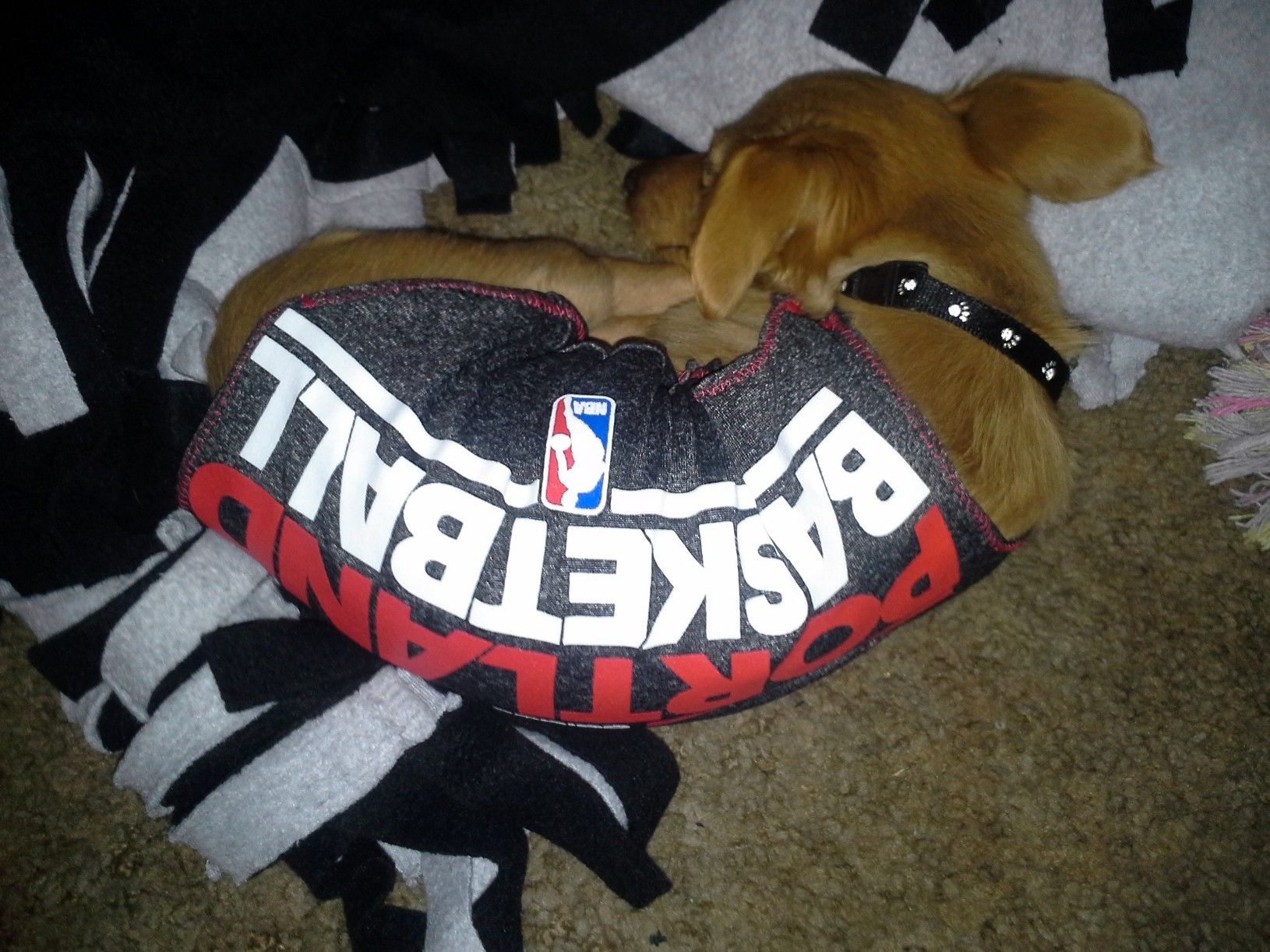 I had to make the pooch some Blazer gear!  We're both so juiced for hoop season.