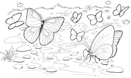 Mariposas Bebiendo Agua En El Rio Colorear Dibujos Con Imagenes