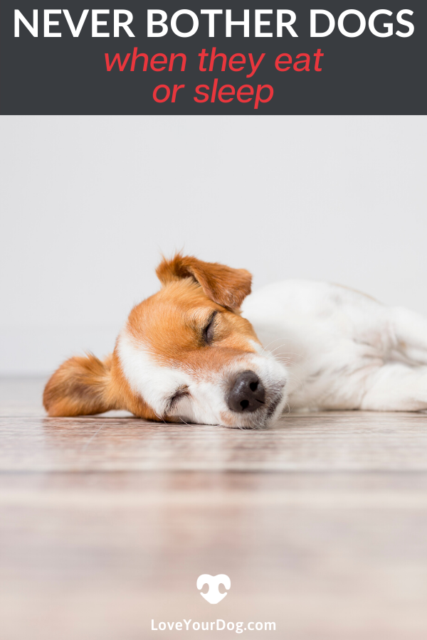 Why You Shouldn T Bother Dogs When They Eat Or Sleep Dogs Dog Deals Dog Care
