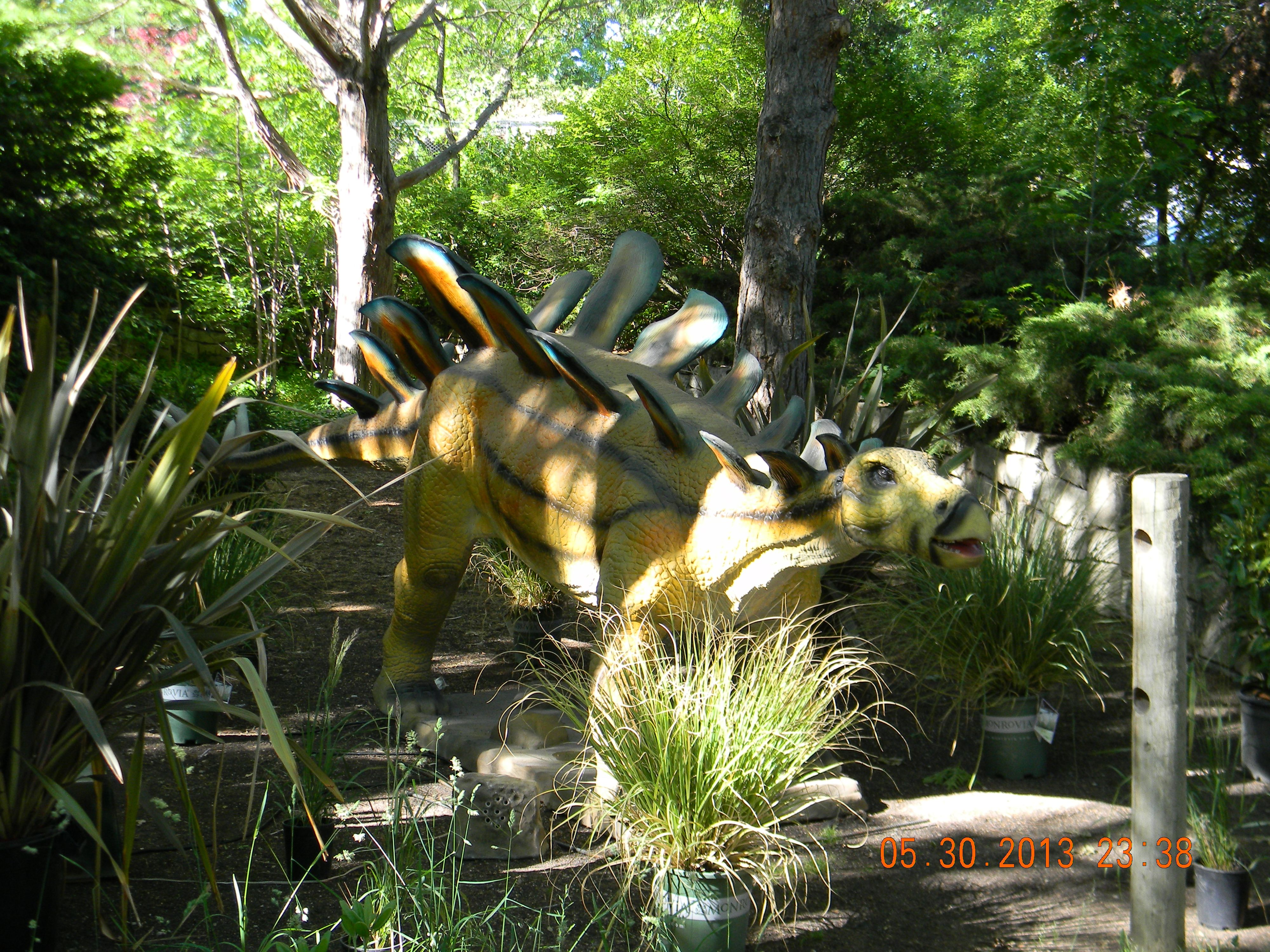 our stegosaurus at zoo boise in idaho behind the scenes at zoo