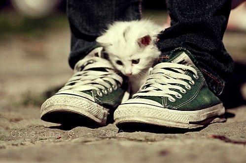 Adorable kitten! <3