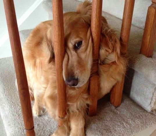 21 Pets Who Have A Complicated Relationship With Stairs Cute
