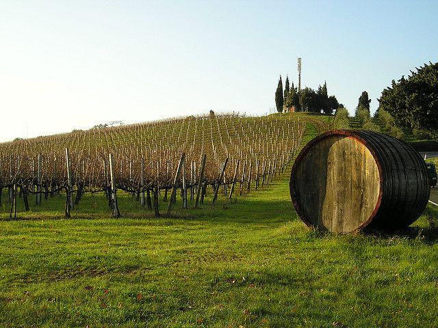 | ♕ | On the hill of Chianti vineyard | by © Roberto La Forgia