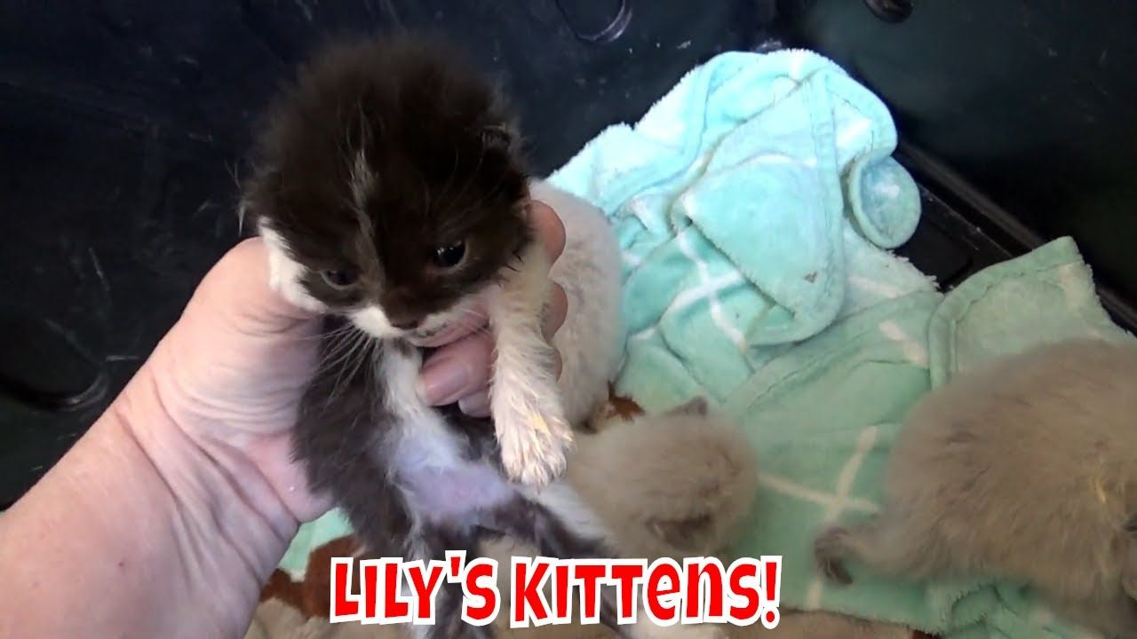 Lily S Kittens Are 2 Weeks Old Fading Kitten Syndrome Kittens Cute Kitten Gif Kittens Cutest