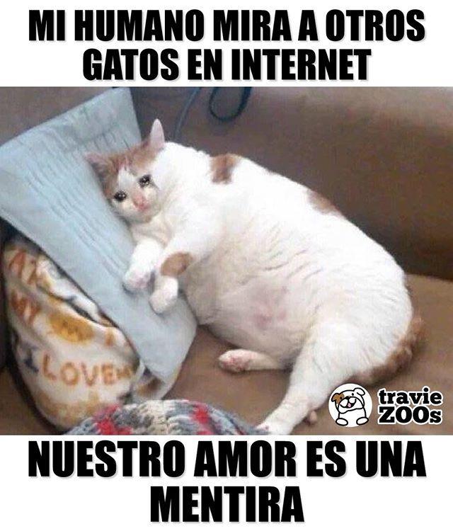 Y Lo Peor Es Que Les Da Like Cat Gato Fotos Infiel Funny Memes Divertidos Gatitos Divertidos Memes