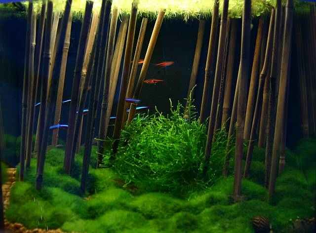 Aquascape Ideas Bamboo Aquascape