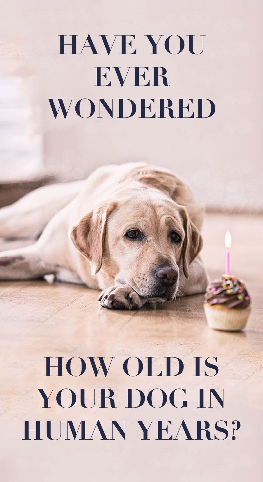 How Old Is Your Dog In Human Years Dog Ages Dog Parents Your Dog