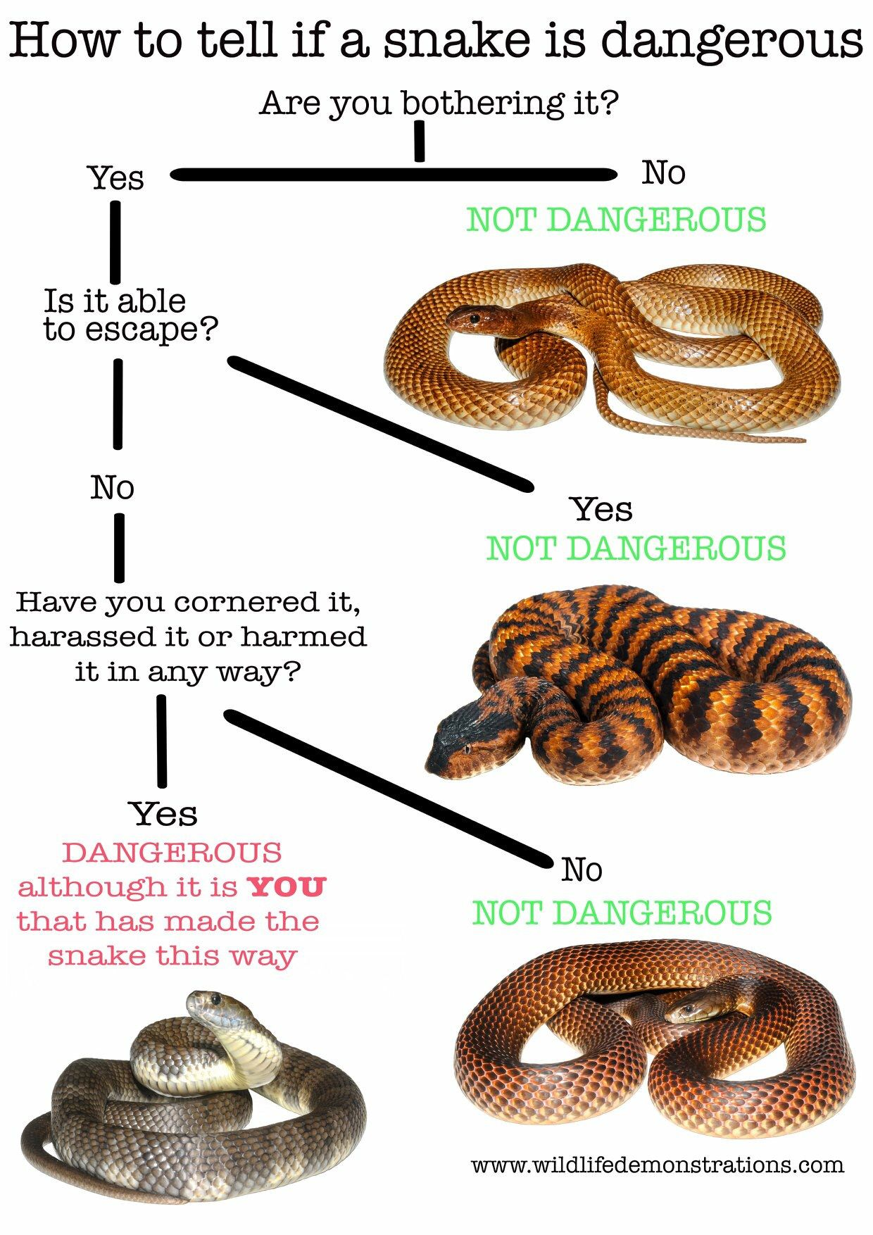 We devised a simple flow chart on how to tell if s snake is
