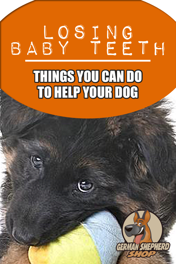 Losing Baby TeethThings You Can Do to Help your Dog (With