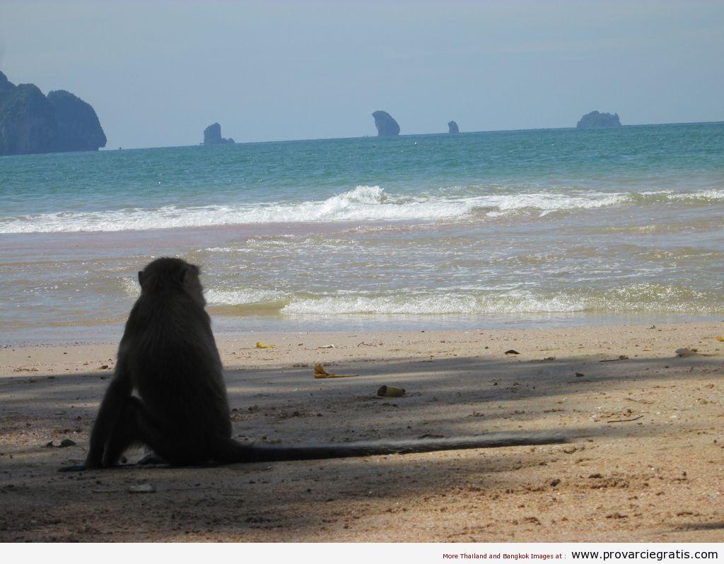 Krabi Ao Nang | Reportage su tutte le spiagge di Krabi nel sud della Thailandia - http://www.provarciegratis.com/thailandia/mare-thailandia-isole/krabi-ao-nang/ - by  Pier Sottojox -  #isolethailandia #Krabi #KrabiAoNang #KrabiRailay #KrabiTonSai #marethailandia #spiaggethailandia Leggi qui tutto l'articolo http://www.provarciegratis.com/thailandia/mare-thailandia-isole/krabi-ao-nang/