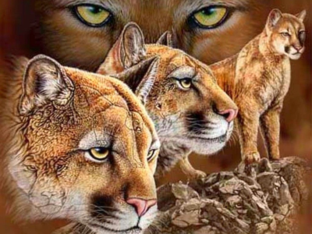 image detail for -free big cats wallpaper - download the free big